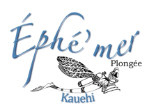 logo Ephemer transparent (2).png